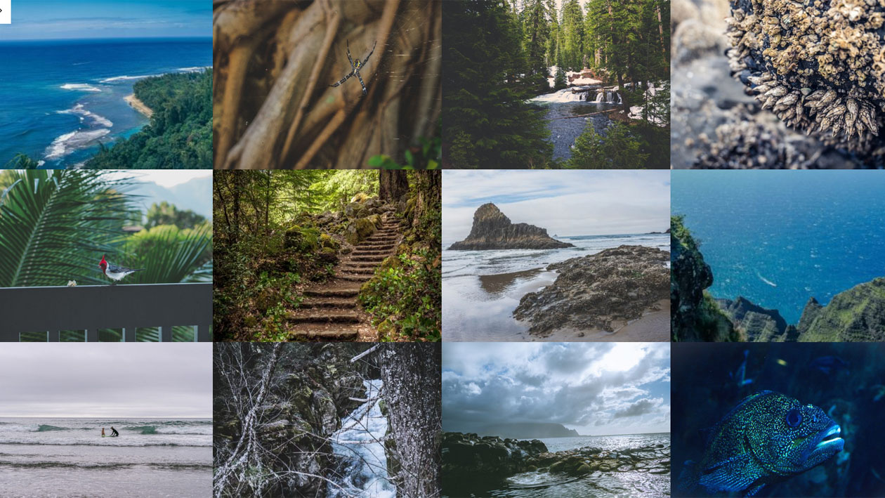 Stock Photography - PhotoCollections.io